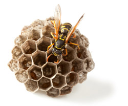 Specialty Services - Bee Nest Removal
