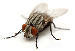 Fly Prevention Service